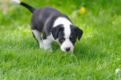 House Training A Puppy The Ultimate Guide