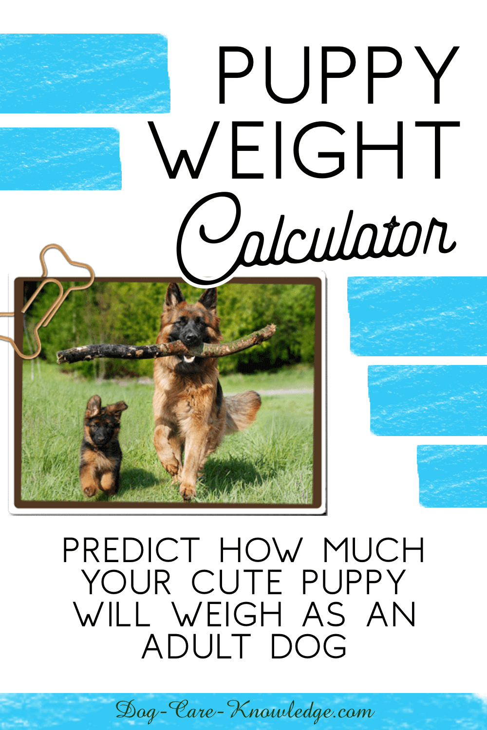 Puppy Weight Calculator How Will