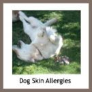 Dogs with allergies