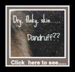 Dog dandruff can be easily treated with the right shampoo.