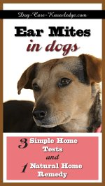 Treat Mites On Dogs Naturally