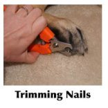 Clipping a dog's nails