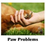 person holding dogs paw