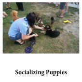 Socializing puppies