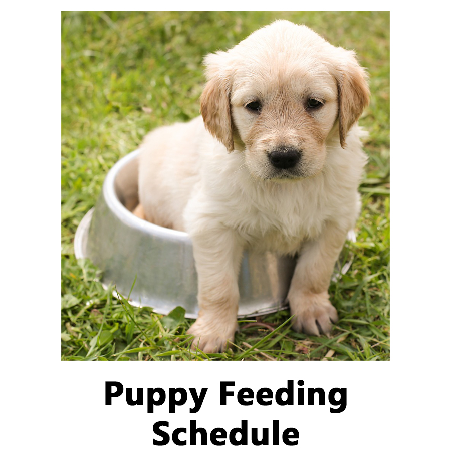 Puppy Feeding Chart