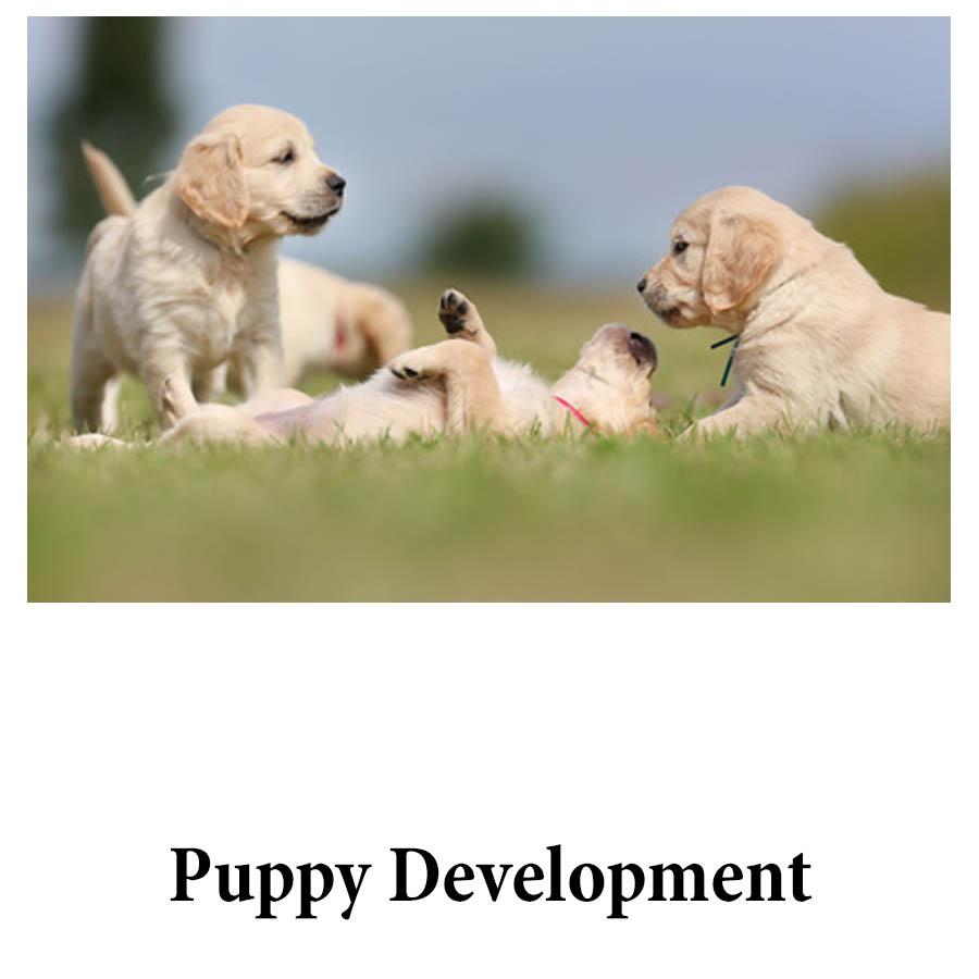 puppy development