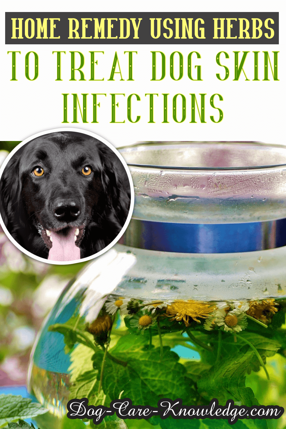 Home Remedy Dog Skin Infection