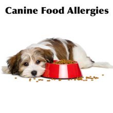 Canine food allergies