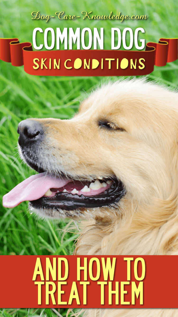 How To Treat Common Dog Skin Conditions
