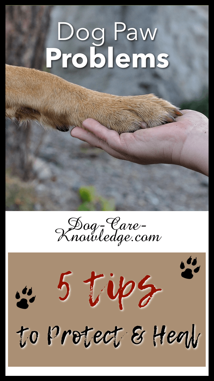 5 Tips for Dog Paw Problems