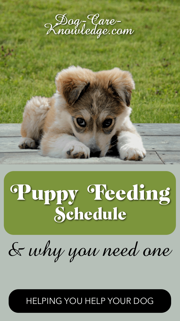 Puppy feeding schedule tells you how often to feed your puppy and when you should be switching to adult food.