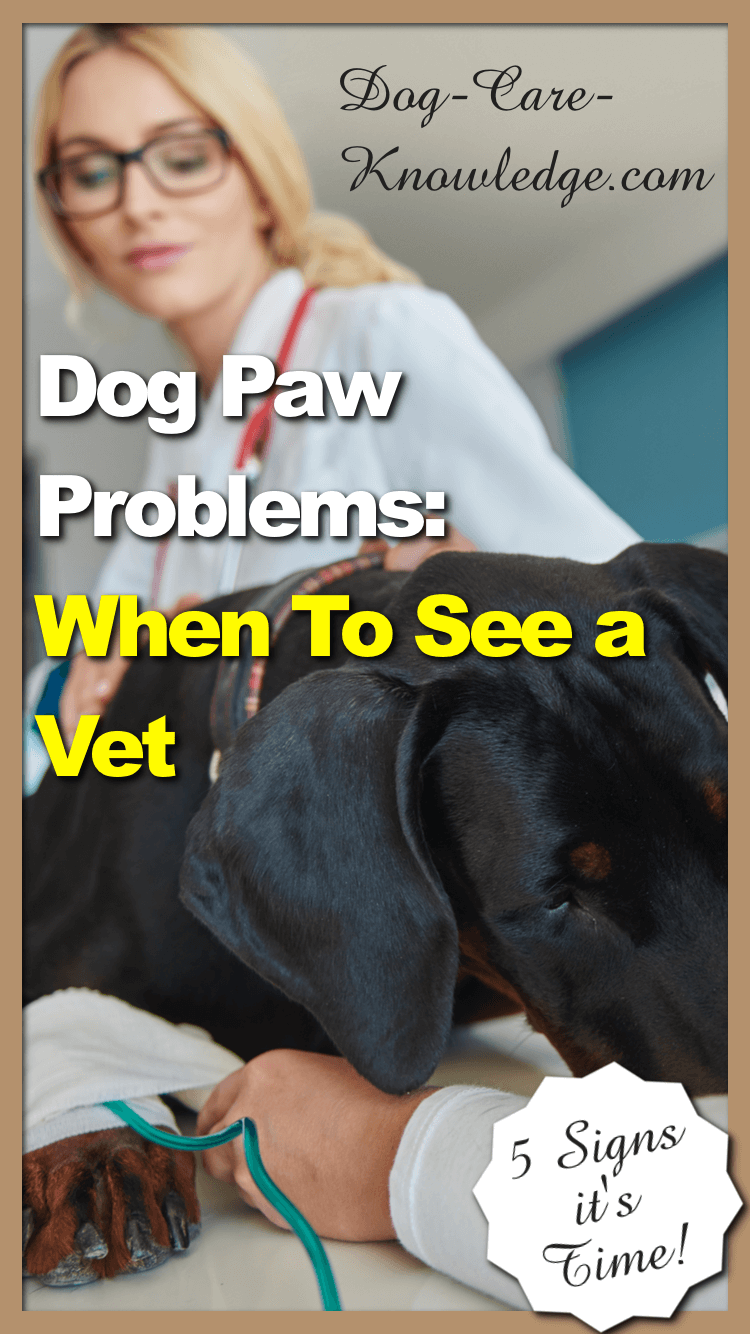Dog Paw Problems and When To See a Vet