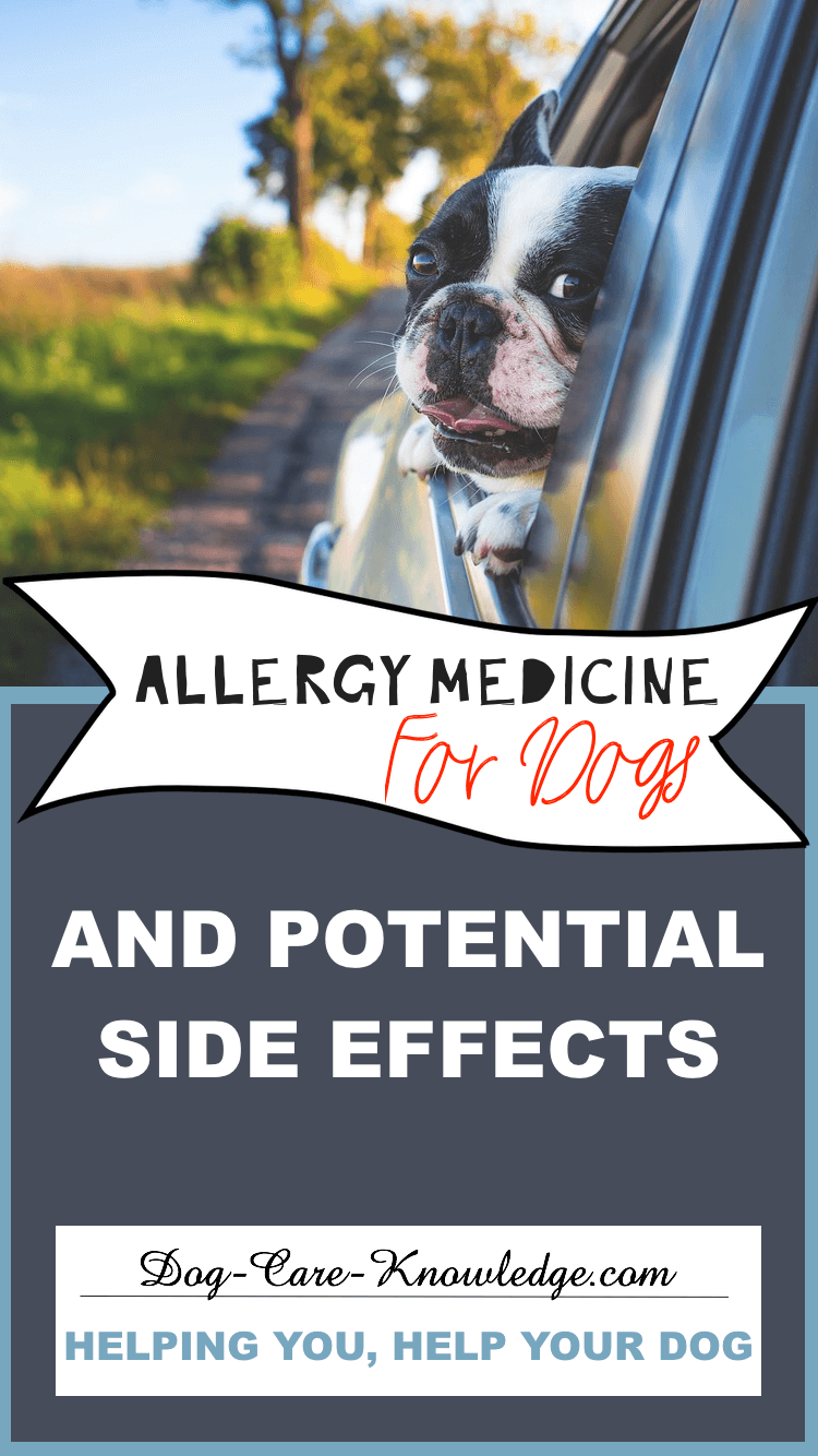 Allergy Medicine for Dogs and the Potential Side Effects.