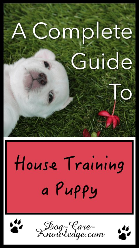 House training a puppy tips.