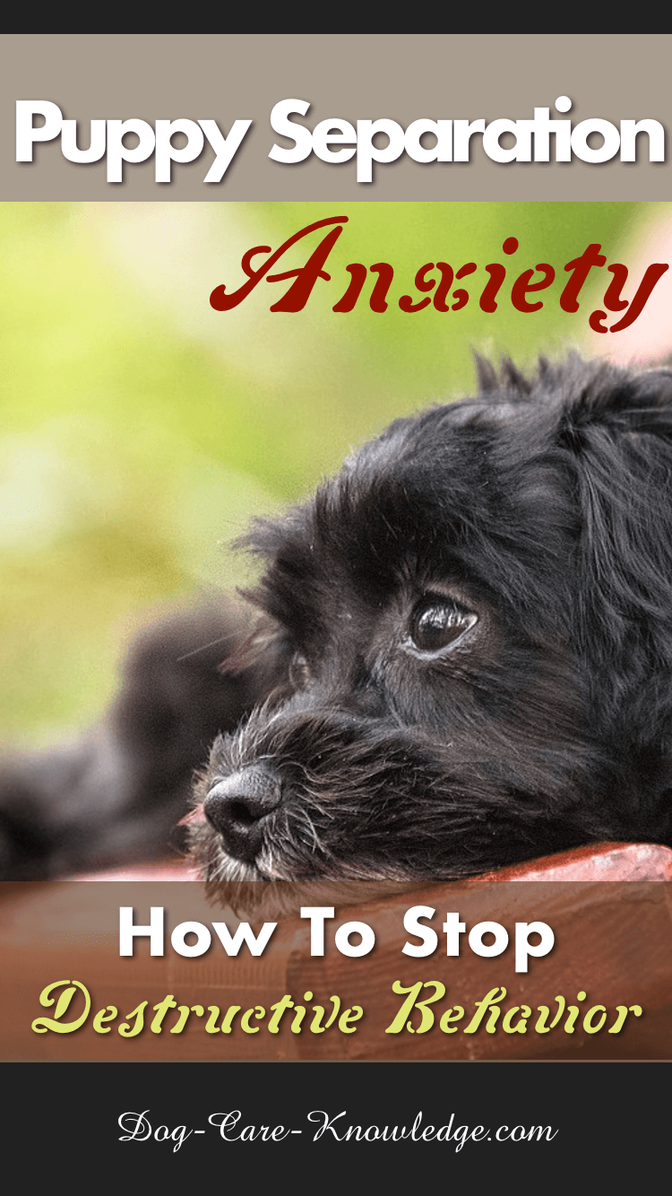 Try these tips to help with puppy separation anxiety and stop destructive behavior at night or when you have to leave your puppy alone.