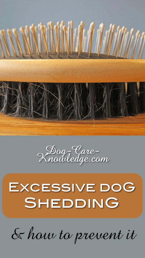 Best products to prevent excessive dog shedding.