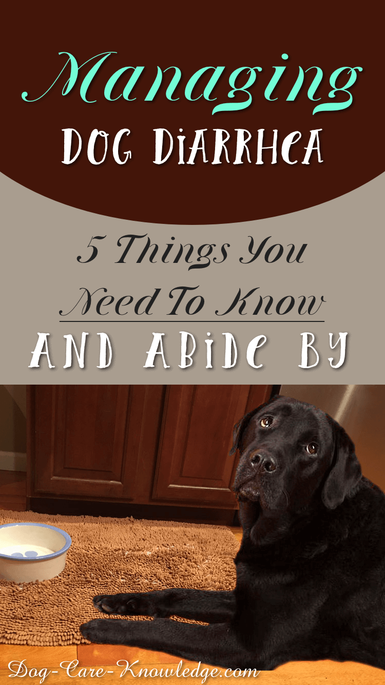 Home remedy and advice you need to stop dog diarrhea.