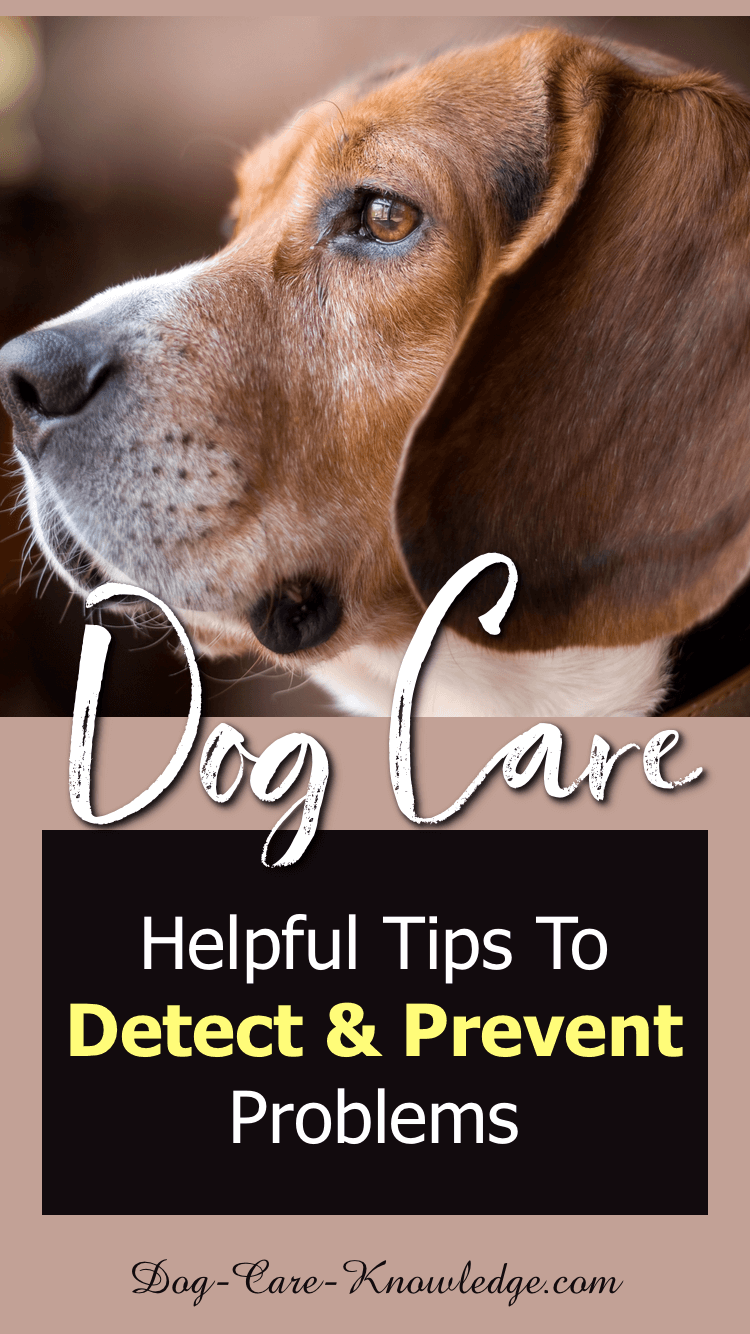 Dog Care Tips To Detect and Prevent Problems