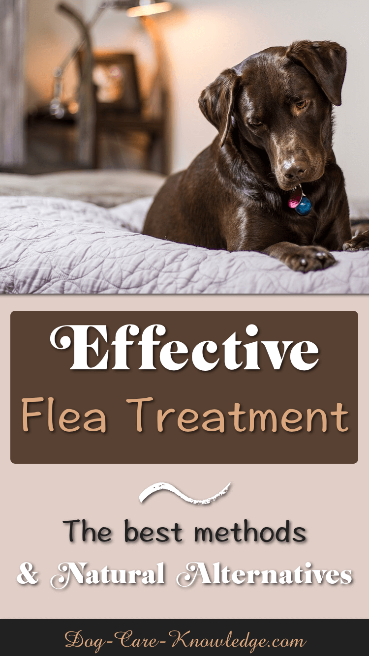 Products and home remedies for a natural dog flea treatment.