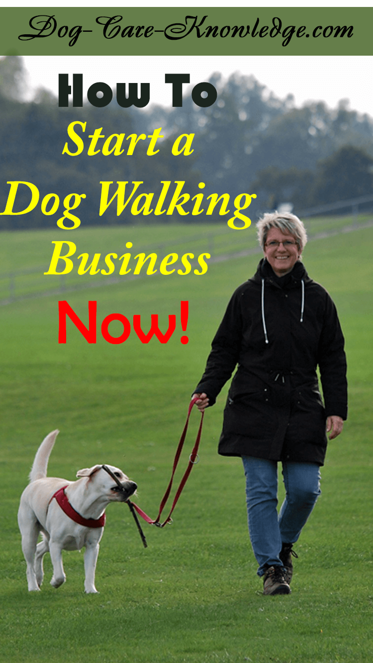 Start a dog walking business.