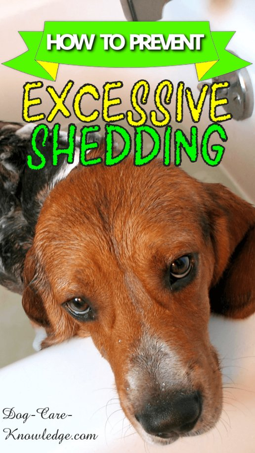 How to Prevent Excessive Shedding in Dogs