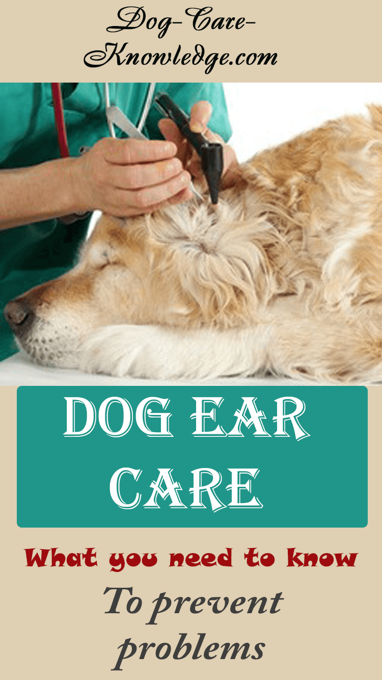Dog ear care tips to keep your dog or puppy's ears in tip-top condition and know what to look for to prevent problems.