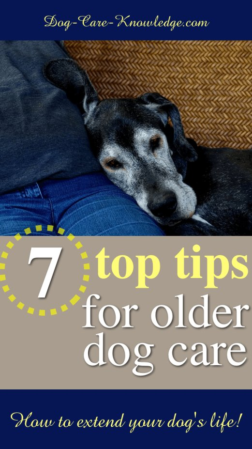 7 tips on extending the life of your older dog.