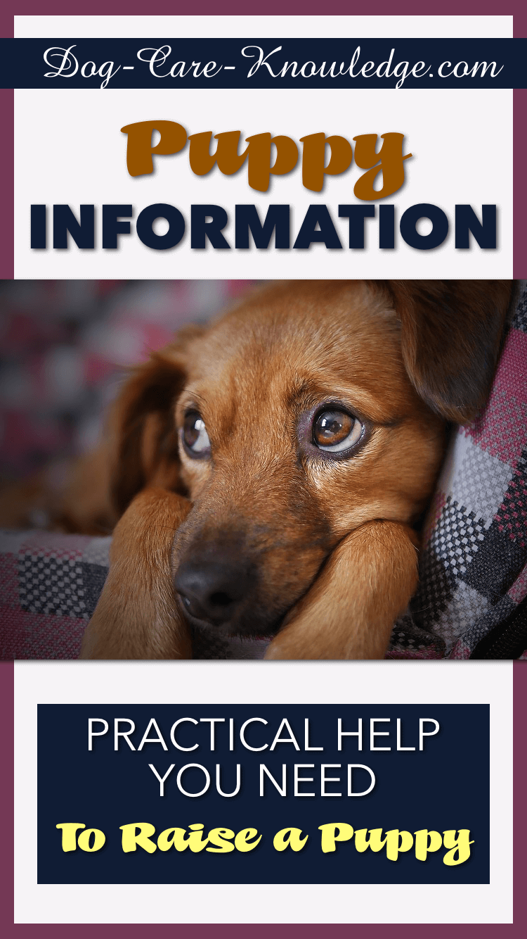 Practical Help with Puppy Information.