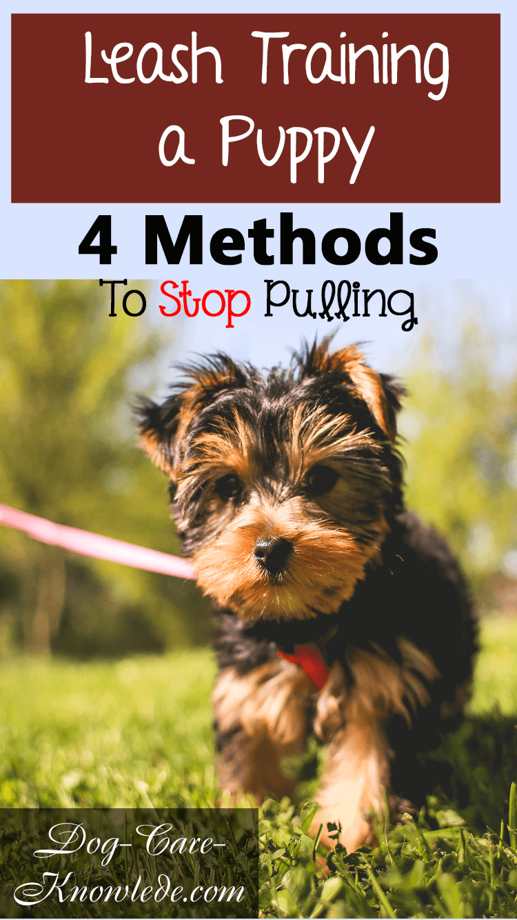 Simple tips on leash training a puppy or dog to stop pulling and walk calmly on a leash.