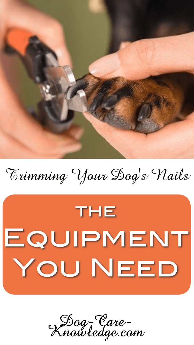 Try these tools for the best technique for trimming dog nails at home.