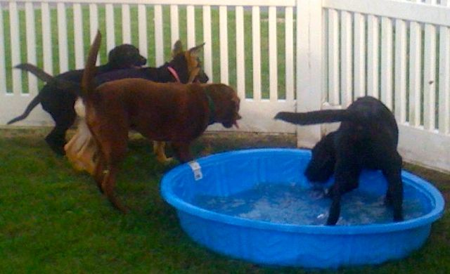 Puppies playing at a puppy party.