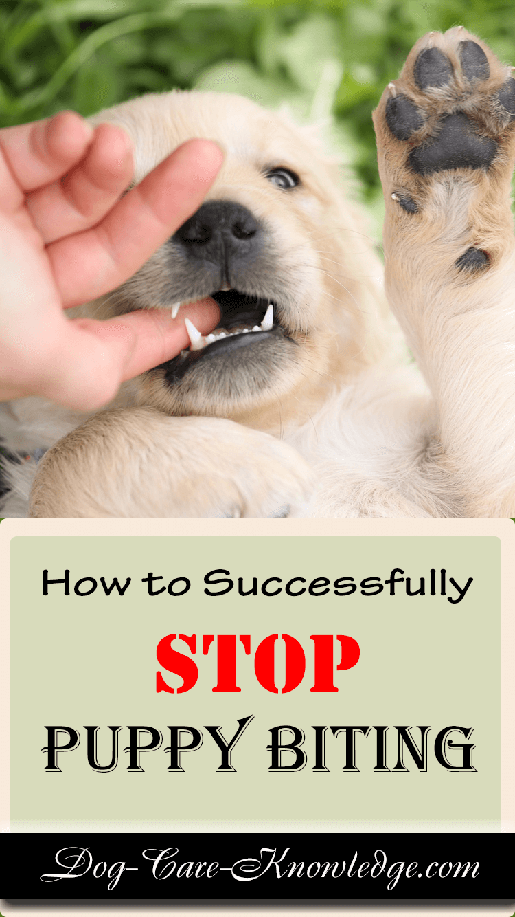 Training method for tips on how to stop your puppy biting and nipping.
