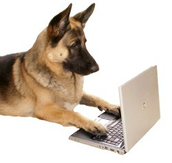Dog businesses you can start from home.