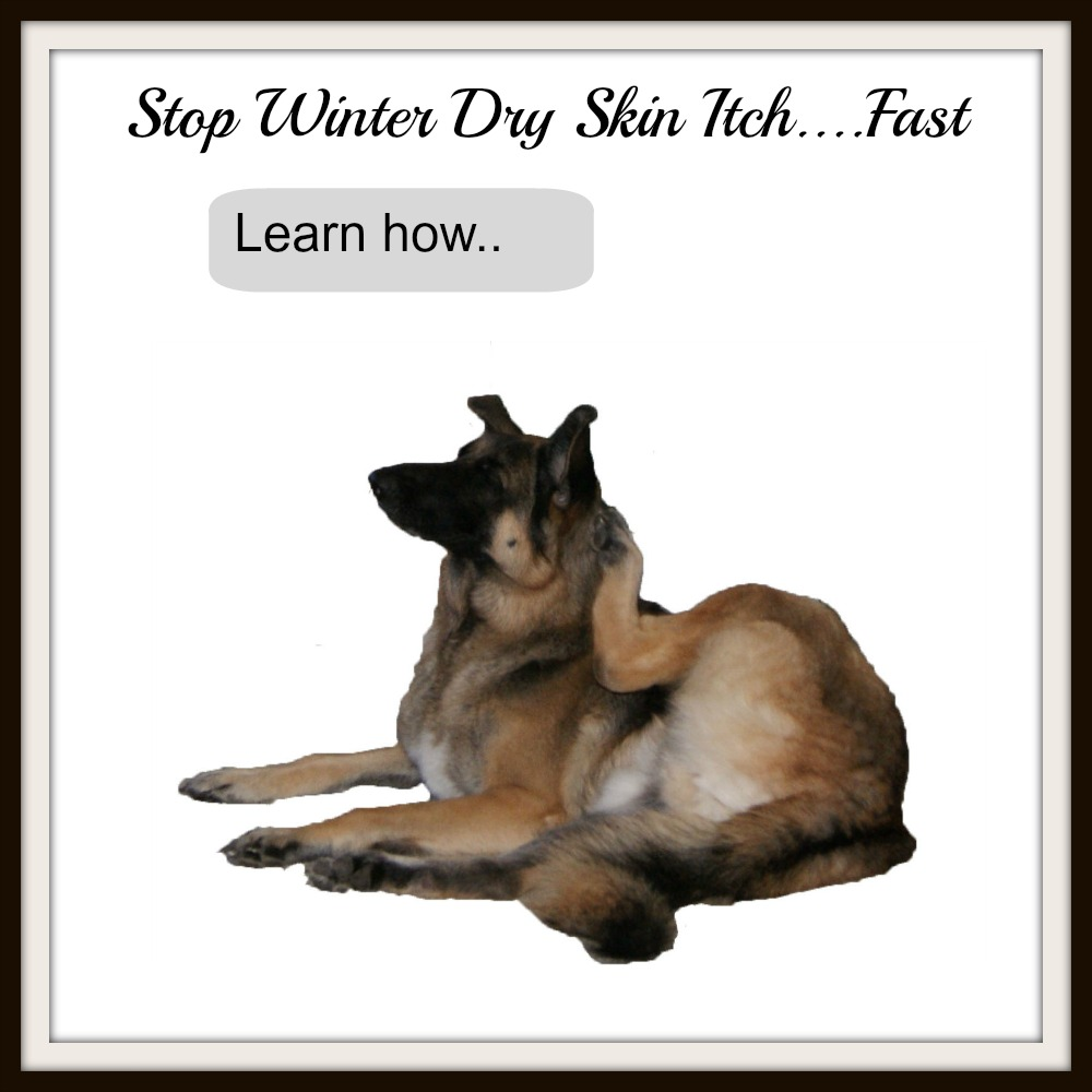 Dog dry skin affects many dogs in the wintertime.  Learn how to relieve your dog's itchy skin on http://www.dog-care-knowledge.com/dog-dry-skin.html