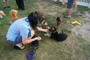 A puppy party is a great way to introduce your puppy to other puppies.