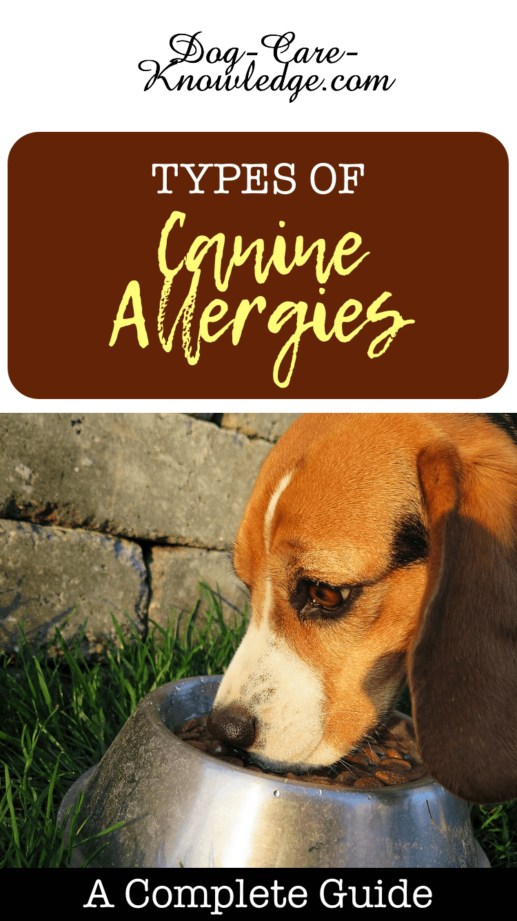 Canine Alleriges and how to treat them.