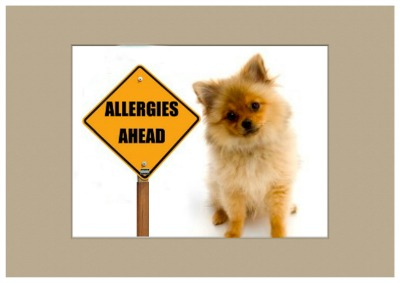 Dog skin allergies in dogs.