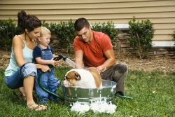 Bathing a dog in medicated shampoo helps with allergies in dogs.