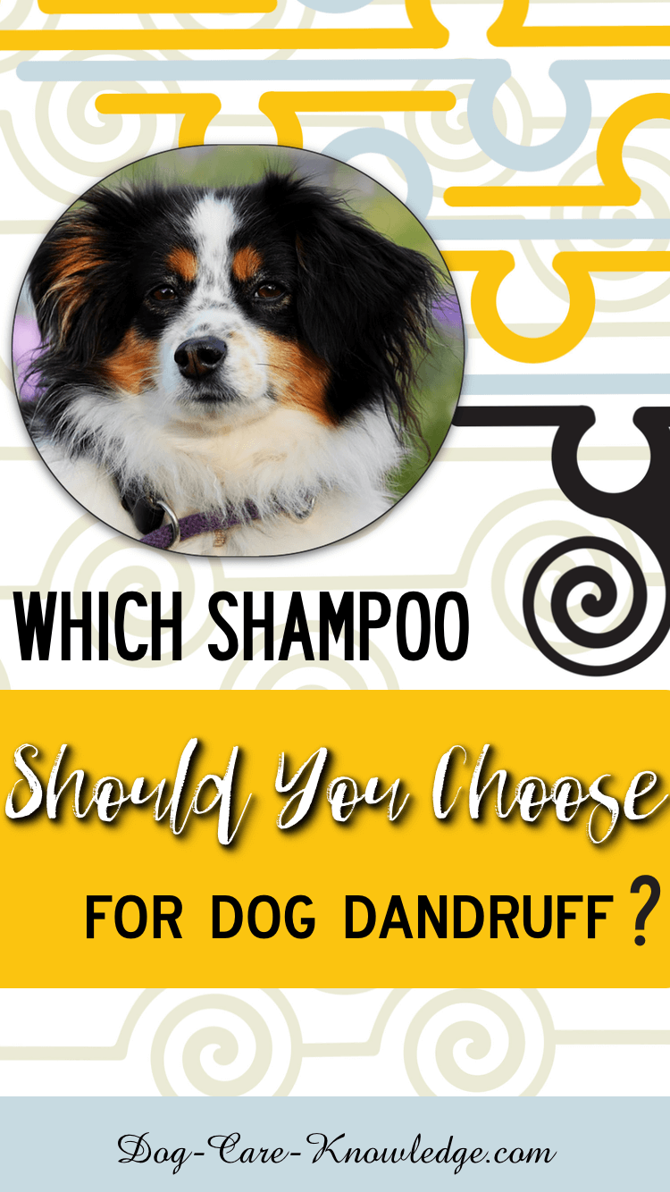 Dog Dandruff: This is How To Fix it in 15 minutes