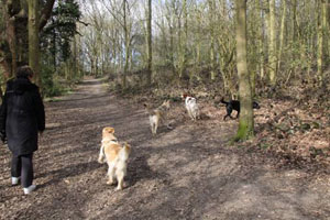 Start a dog walking business if your passion is your dog!