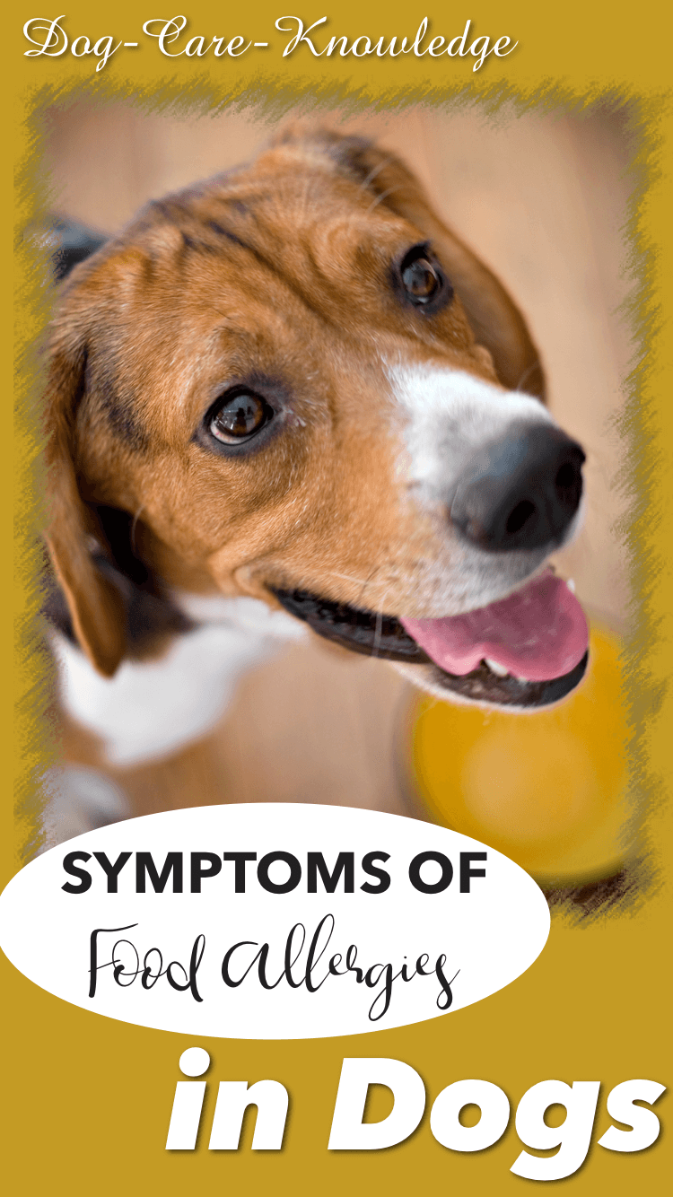 Food Allergy Symptoms in Dogs
