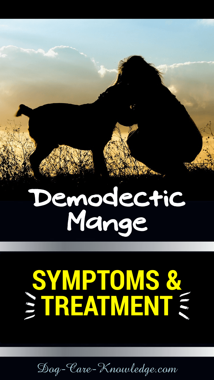 Demodectic Mange Symptoms and Treatment