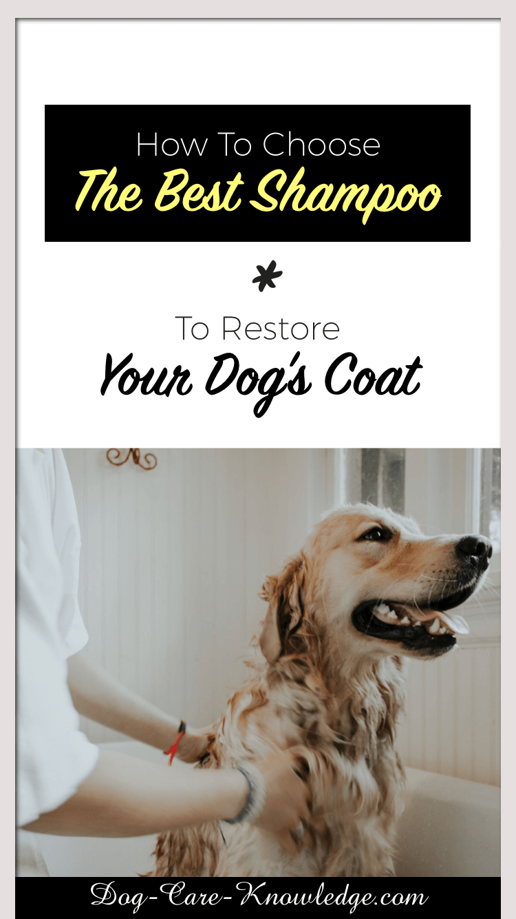 Best Dog Shampoos To Restore Your Dog's Coat.