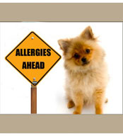 Allergy symptoms in dogs.