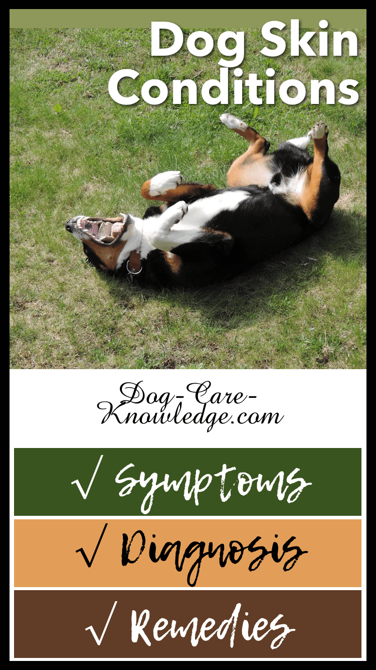 Home remedies to relieve dog skin conditions, such as allergies and dry skin, using natural products and shampoos.
