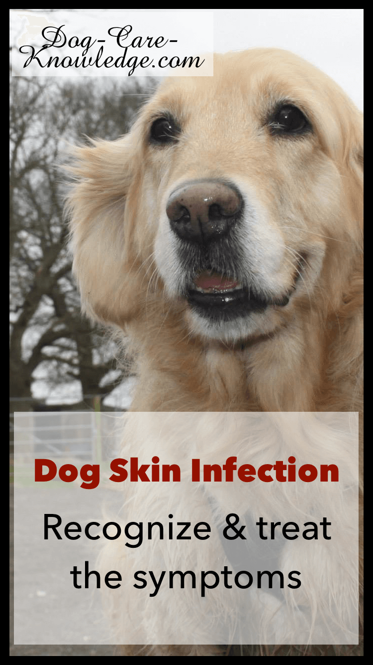 Dog Skin Infection: This Is How To Cure and Treat It