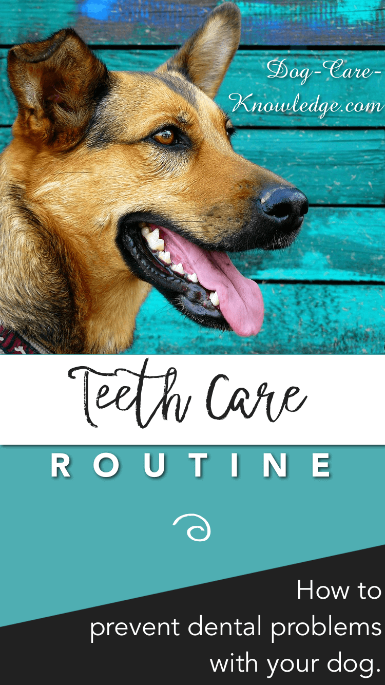 Healthy dog teeth care routine.