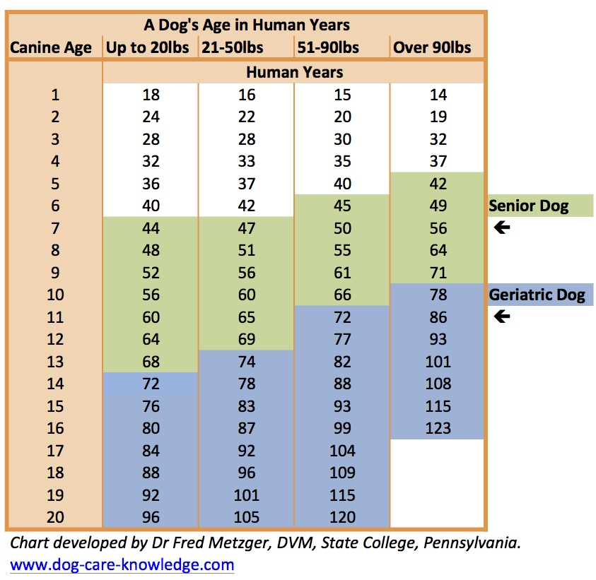 Dogs age in human years.