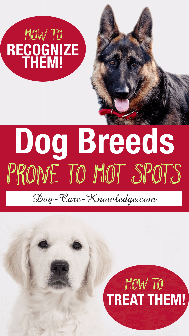Hot Spots in Dogs  4 Steps To A Cure