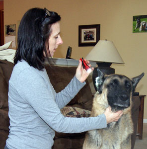 Checking a dogs ear.